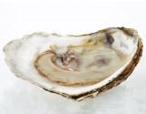 Waterkerssoep met oesters en sorbet van desperados